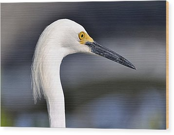 Great Egret Wood Print by Andres LaBrada