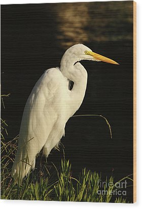 Great Egret At Morning Wood Print by Robert Frederick