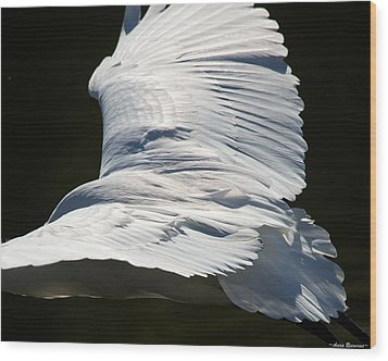 Great Egret Wood Print by Avian Resources