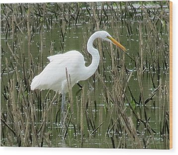 Wood Print featuring the photograph Great Egret by Eric Switzer