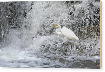 Great Egret Hunting At Waterfall Series 1 Wood Print