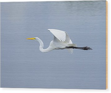 Wood Print featuring the photograph Great Egret In Flight by John M Bailey