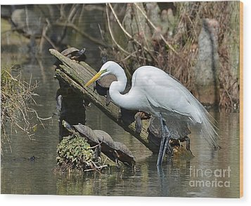 Great Egret In The Swamps Wood Print