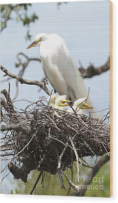 Great Egret Nest With Chicks And Mama Wood Print by Carol Groenen