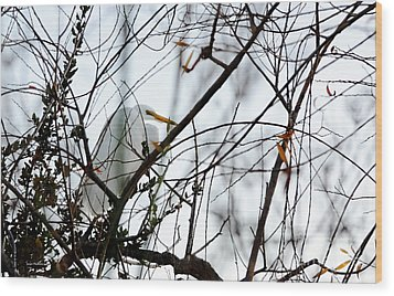 Great Egret Roosting In Winter Wood Print