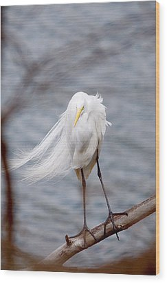 Great Egret Windy Portrait Wood Print