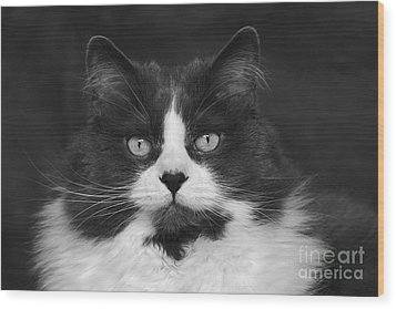 Great Gray Cat Wood Print