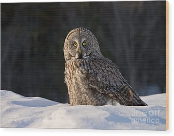 Great Gray Owl In Snow Wood Print
