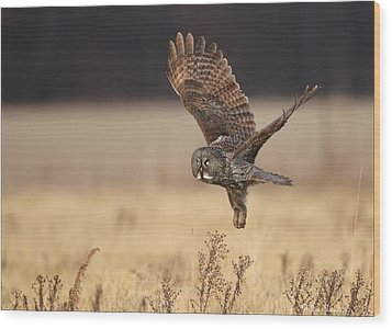 Great Gray Owl Liftoff Wood Print by Daniel Behm