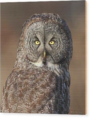 Great Gray Owl Portrait Wood Print by Daniel Behm