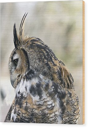 Great Horned Owl Wood Print by Dana Moyer