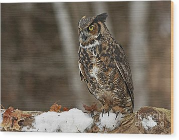 Great Horned Owl In A Snowy Winter Forest Wood Print by Inspired Nature Photography Fine Art Photography