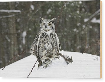 Great Horned Owl In A Winter Snow Storm Wood Print by Inspired Nature Photography Fine Art Photography