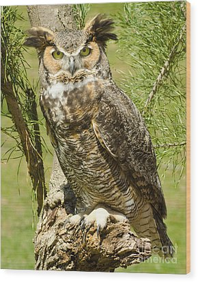Great Horned Owl Wood Print by JRP Photography