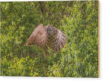 Great Horned Owl Wood Print by Laura Bentley