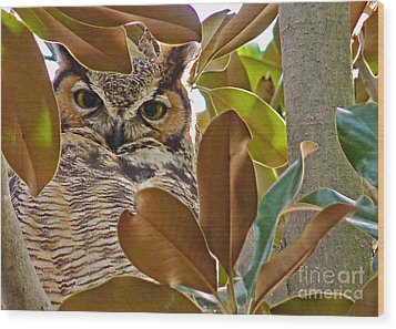 Wood Print featuring the photograph Great Horned Owl by Meghan at FireBonnet Art