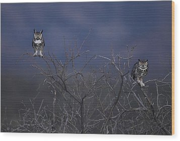 Great Horned Owl Pair At Twilight Wood Print by Daniel Behm