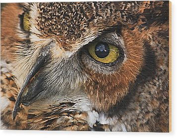 Wood Print featuring the photograph Great Horned Owl by Tammy Schneider
