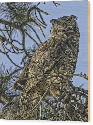 Great Horned Owl Wood Print by Tom Wilbert