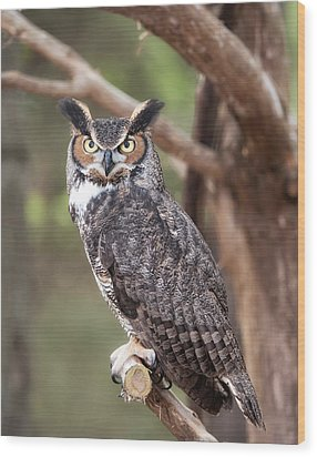 Wood Print featuring the photograph Great Horned Owl by Tyson and Kathy Smith