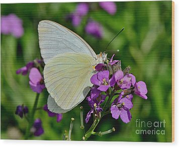 Great Southern White Butterfly Wood Print by Kathy Baccari