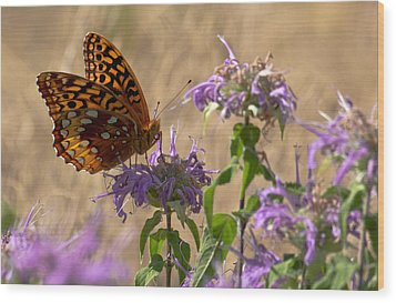 Great Spangled On Bee Balm Wood Print by Shelly Gunderson