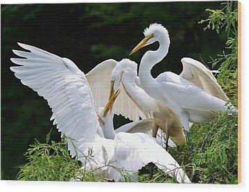 Great White Egret Feeding Time Wood Print by Paulette Thomas