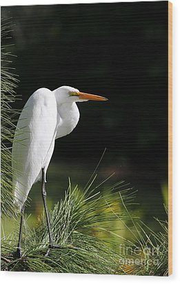 Great White Egret In The Tree Wood Print by Sabrina L Ryan