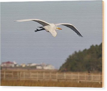 Great White Egret Incoming Wood Print by Paulette Thomas