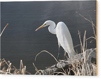 Great White Egret Wood Print by Juan Romagosa