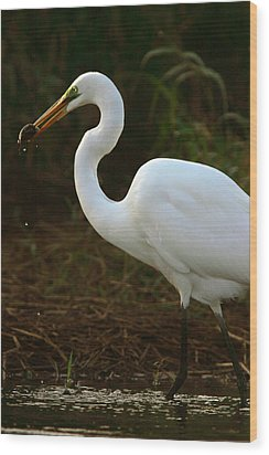 Great White Egret Wood Print by Mark Russell