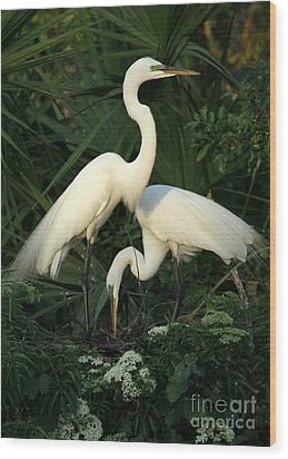 Great White Egret Mates Wood Print