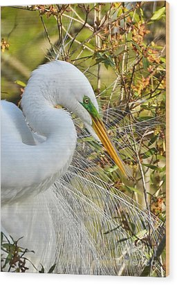 Great White Egret Portrait Wood Print