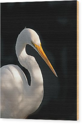 Great White Egret Portrait. Merritt Island N.w.r. Wood Print