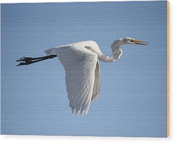 Great White Egret Wings Down Wood Print by Paulette Thomas
