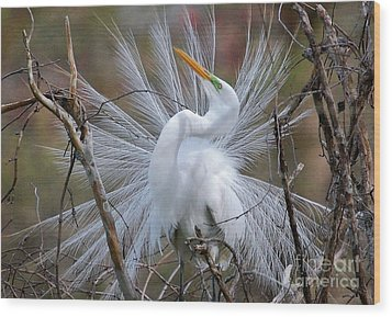 Wood Print featuring the photograph Great White Egret With Breeding Plumage by Kathy Baccari