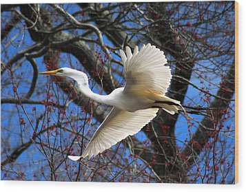 Great White Heron Islip New York Wood Print