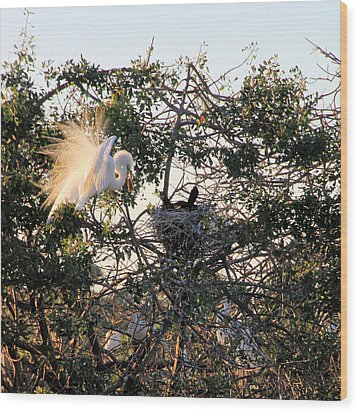 Great White Heron With Chicks Wood Print by Rosalie Scanlon
