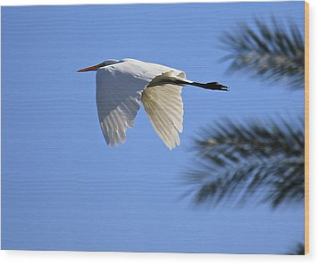Wood Print featuring the photograph Great White In Flight by Penny Meyers