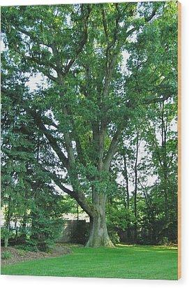 Great White Oak Wood Print