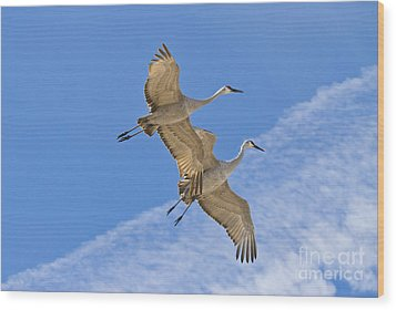 Greater Sandhill Cranes In Flight Wood Print by William H Mullins