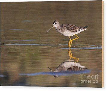 Greater Yellow Legs Wood Print