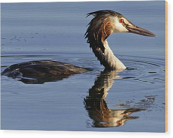 Grebe At Sunset Wood Print by Charles Lupica