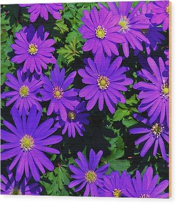 Grecian Wildflowers 2 Wood Print