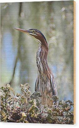 Wood Print featuring the photograph Green Backed Heron In An Oak Tree by Kathy Baccari