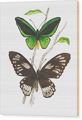 Green Birdwing Butterfly Wood Print by Cindy Hitchcock