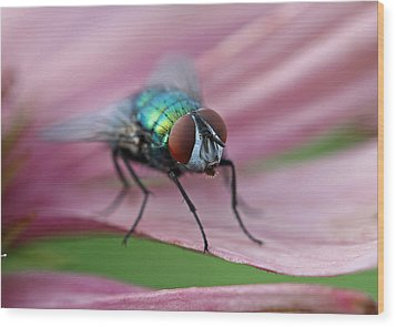Green Bottle Fly Wood Print by Juergen Roth