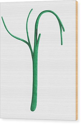 Wood Print featuring the drawing Green Branche by Giuseppe Epifani