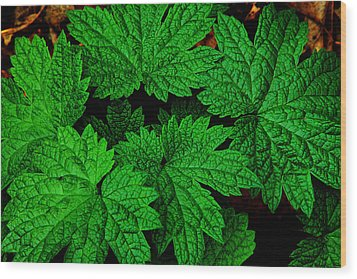 Green Burst Wood Print by James Hammen