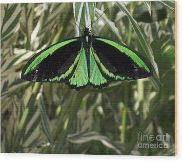 Wood Print featuring the photograph Green Butterfly by Brenda Brown